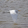 Water Skimming by Kenneth Albin