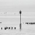 Water Walking Birds by Michael Thomas