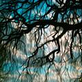 Water Willow by Mykel Davis