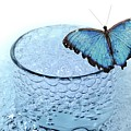 Water With Butterfly by Manfred Lutzius