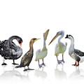 Waterbirds by Svetlana Foote
