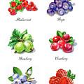 Watercolor Berries Illustration Collection I by Irina Sztukowski
