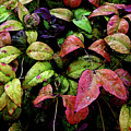 Watercolor Colorful Leaves After A Shower 1771 W_2 by Steven Ward