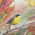 Watercolor - Common Yellowthroat by Cascade Colors