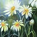 Daisies Flowers  by Olga Shvartsur