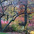 Watercolor Forest by Lorraine Devon Wilke