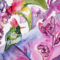Watercolor - Frilled Coquette Hummingbird With Colorful Background by Cascade Colors