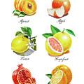 Watercolor Fruit Illustration Collection I by Irina Sztukowski
