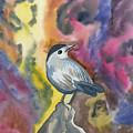 Watercolor - Gray Catbird by Cascade Colors
