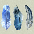 Watercolor Hand Painted Feathers by Heinz G Mielke
