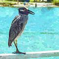 Watercolor Herons 3 Of 4 by Susan Molnar