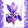Watercolor Iris Painting by Irina Sztukowski
