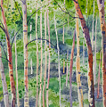 Watercolor - Magical Aspen Forest After A Spring Rain by Cascade Colors
