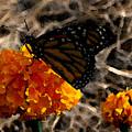 Watercolor Monarch by PJ  Cloud
