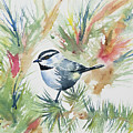Watercolor - Mountain Chickadee And Pine by Cascade Colors