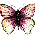 Watercolor Pink Butterfly by Hannah Sutherland