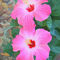 Watercolor Pink Hibiscus Blooms Vertical by Aimee L Maher ALM GALLERY