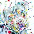 Watercolor Pit Bull.2 by Fabrizio Cassetta