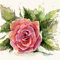 Watercolor Rose by Olga Shvartsur