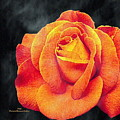 Watercolor Rose by Pamula Reeves-Barker