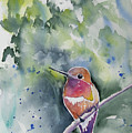 Watercolor - Rufous Hummingbird Portrait by Cascade Colors