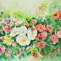 Watercolor Series 4 by Ingrid Dohm