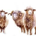 Watercolor Sheep by Tatyana Komtsyan