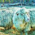 Watercolor Sheep by Vicki Dreher