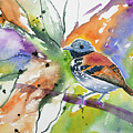Watercolor - Spotted Antbird by Cascade Colors