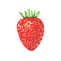 Watercolor Strawberry  by Irina Sztukowski