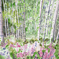 Watercolor - Summer Aspen Glade by Cascade Colors