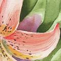 Watercolor Tiger Lily Dance Of Petals Close Up  by Irina Sztukowski