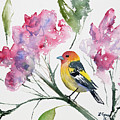Watercolor - Western Tanager In A Flowering Tree by Cascade Colors