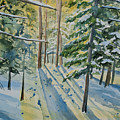 Watercolor - Winter Pine Forest Magic by Cascade Colors