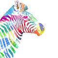 Watercolor Zebra by Etienne Outram