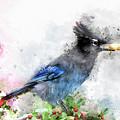 Watercolored Steller's Jay  by Teresa Zieba