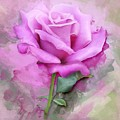 Watercolour Pastel Lilac Rose by Shabby Chic and Vintage Art