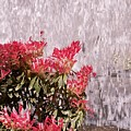 Waterfall Flowers by Tim Allen