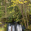 Waterfall In A Park, Whatcom Creek by Panoramic Images
