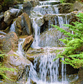 Waterfall In The Vandusen Botanical Garden 1 by Viktor Birkus