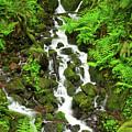 Waterfall Through The Ferns by Rick Strobaugh