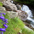 Waterfalls And Bluebells by Mircea Costina Photography