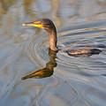 Waterfowl by Tammy Mutka