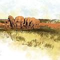 Waterhole - Addo National Park  by Ronald Rosenberg