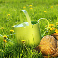 Watering Can In The Grass by Sandra Cunningham
