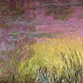 Waterlilies At Sunset by Claude Monet