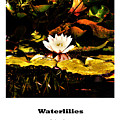 Waterlilies by Nigel Dudson