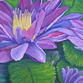 Waterlilies by SheRok Williams