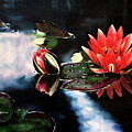 Waterlilly by Carole Robare