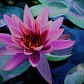 Waterlily by Brigitte Harper